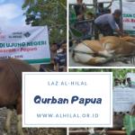Penyembelihan Hewan Qurban di Papua