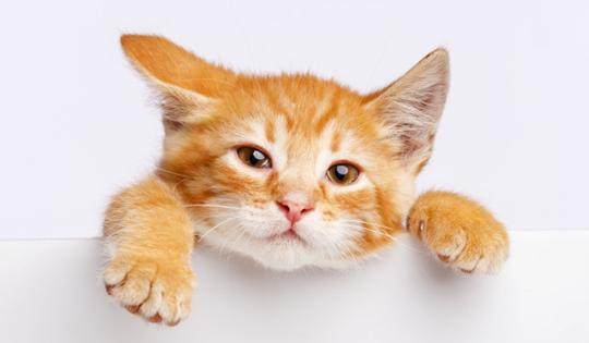 Doa Kucing untuk Orang yang Menyayanginya 1